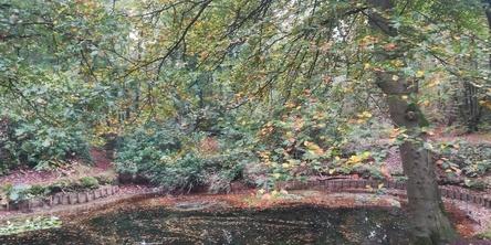 De fluistering van de bladeren
