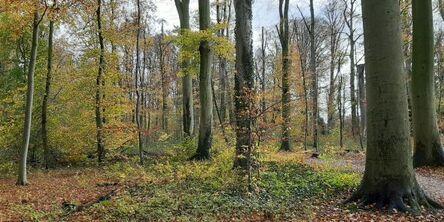 Bomen in de natuur en een familieopstelling